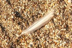 Pluma de pájaro larga foto de archivo libre de regalías