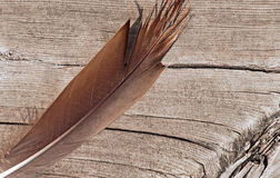Pluma de pájaro que pone en la vieja superficie de madera del muelle Imagenes de archivo
