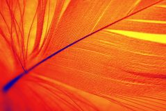 Pluma de Phoenix Foto de archivo libre de regalías