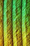 Pluma de un pájaro Imagenes de archivo