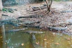 Pluma del cocodrilo en el safari y Marine Park de Bali fotografía de archivo libre de regalías