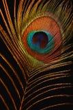 Pluma del firebird Fotografía de archivo libre de regalías