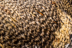 Pluma del fondo el primer del gallo Imagen de archivo libre de regalías