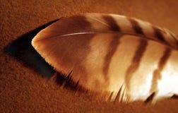 Pluma del halcón fotos de archivo