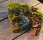 Pluma del musgo y del pavo real Fotografía de archivo