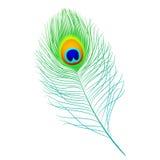Pluma del pavo real