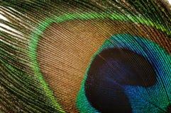 Pluma del pavo real, Fotografía de archivo