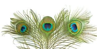 Pluma del pavo real Imágenes de archivo libres de regalías