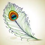 Pluma del pavo real ilustración del vector
