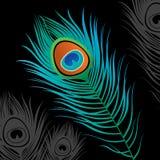 Pluma del pavo real libre illustration
