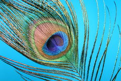 Pluma del pavo real Foto de archivo