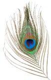 Pluma del pavo real aislada Imagen de archivo libre de regalías