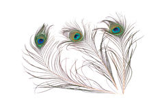 Pluma del pavo real aislada en el fondo blanco stock de ilustración