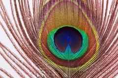Pluma del pavo real en blanco Imagen de archivo
