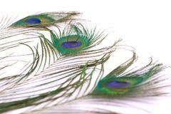 Pluma del pavo real en el fondo blanco Fotografía de archivo libre de regalías