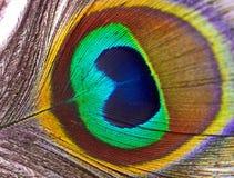 Pluma del pavo real vertida naturalmente imágenes de archivo libres de regalías