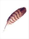 Pluma del Watercolour Foto de archivo libre de regalías