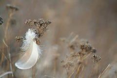 Pluma e hierba. Imagenes de archivo