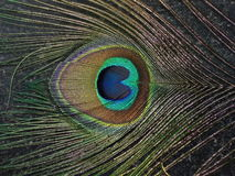 Pluma en casquillo de las naturalezas Imagen de archivo