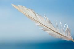 Pluma en el cielo Fotografía de archivo libre de regalías
