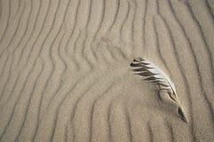 Pluma en la arena Imagen de archivo