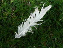 Pluma en la hierba Imagen de archivo libre de regalías