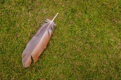 Pluma en la hierba Fotos de archivo