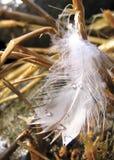 Pluma en la hierba - vertical Fotos de archivo libres de regalías