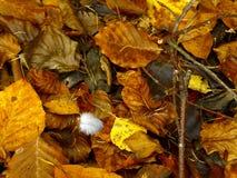 Pluma en suelo del bosque del otoño Foto de archivo libre de regalías