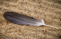 Pluma en una playa Great Lakes imagen de archivo