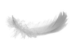 Pluma gris del cisne Imagen de archivo libre de regalías