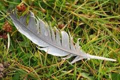 Pluma gris en hierba Fotografía de archivo