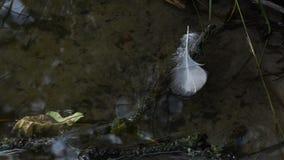 Pluma hermosa de los flotadores de un pájaro en el río almacen de metraje de vídeo