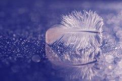 Pluma Las imágenes azules del tono de la pluma del ` s del pájaro Foto de archivo
