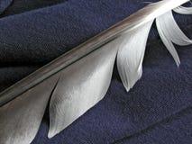 Pluma ligera en azul Imagen de archivo libre de regalías