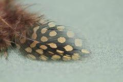 Pluma manchada del pájaro Imágenes de archivo libres de regalías