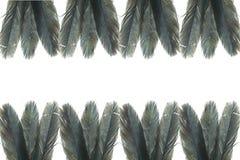 Pluma negra Imágenes de archivo libres de regalías