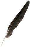 Pluma negra del águila aislada Imagenes de archivo