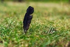 Pluma negra en hierba Fotografía de archivo libre de regalías
