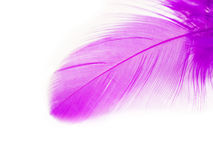 Pluma púrpura Fotos de archivo
