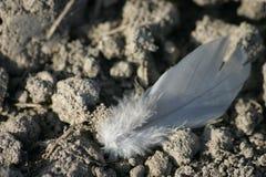Pluma perdida Fotografía de archivo