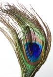 Pluma que fluye Foto de archivo libre de regalías