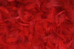 Pluma roja Imágenes de archivo libres de regalías