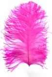 Pluma rosada Fotos de archivo libres de regalías