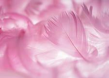 Pluma rosada Imagenes de archivo