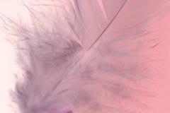 Pluma rosada Fotos de archivo