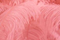 Pluma rosada del pájaro para el fondo Foto de archivo