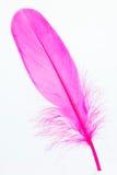 Pluma rosada que se coloca en el primer de la espuma Foto de archivo libre de regalías