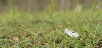 Pluma suave blanca que sopla en viento Foto de archivo