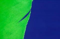 Pluma verde imágenes de archivo libres de regalías
